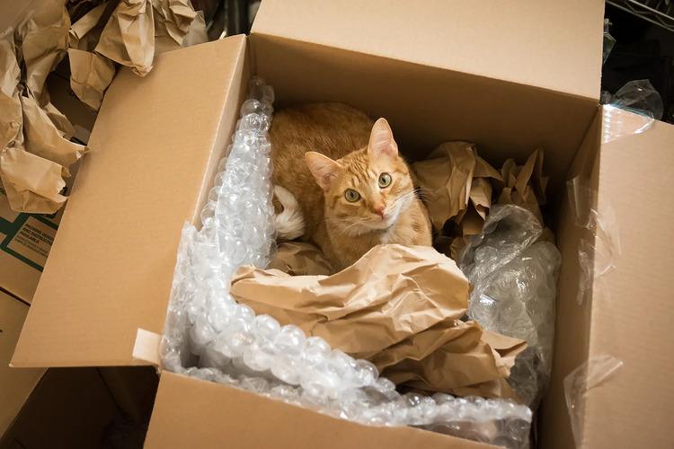 Как подготовить кота к переезду