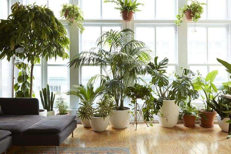 Как упаковать комнатные растения при переезде