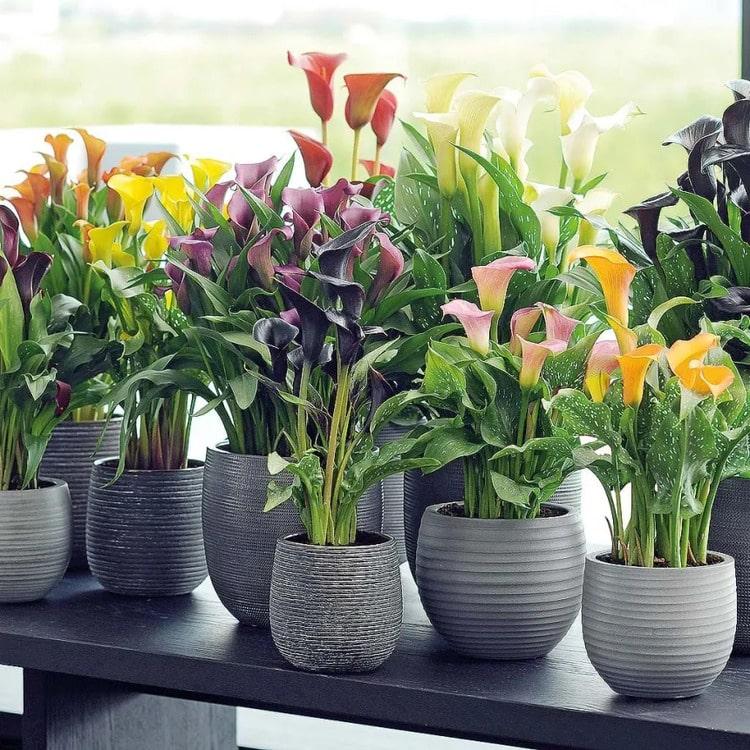 перевезти комнатные цветы и растения