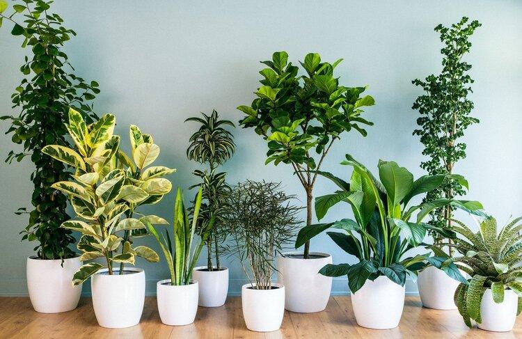 упаковать комнатные растения при переезде